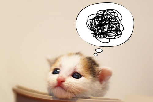 猫が布団にオシッコしちゃう!布団に粗相を繰り返すネコの原因と対策。