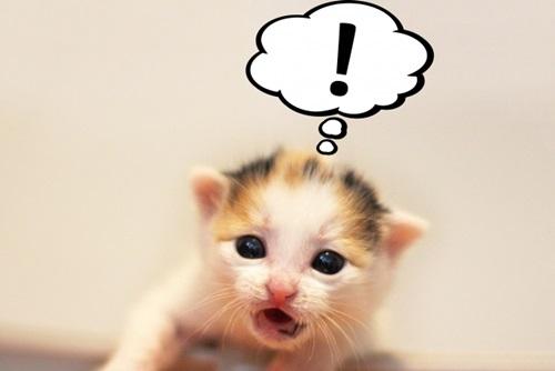 写真から簡単にできる♪スマホアプリを使って猫動画を作ってみました!